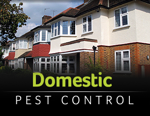 Domestic Pest Control