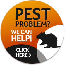 Pest Problem? - We Can Help!