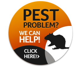 Pest Problem - We Can Help